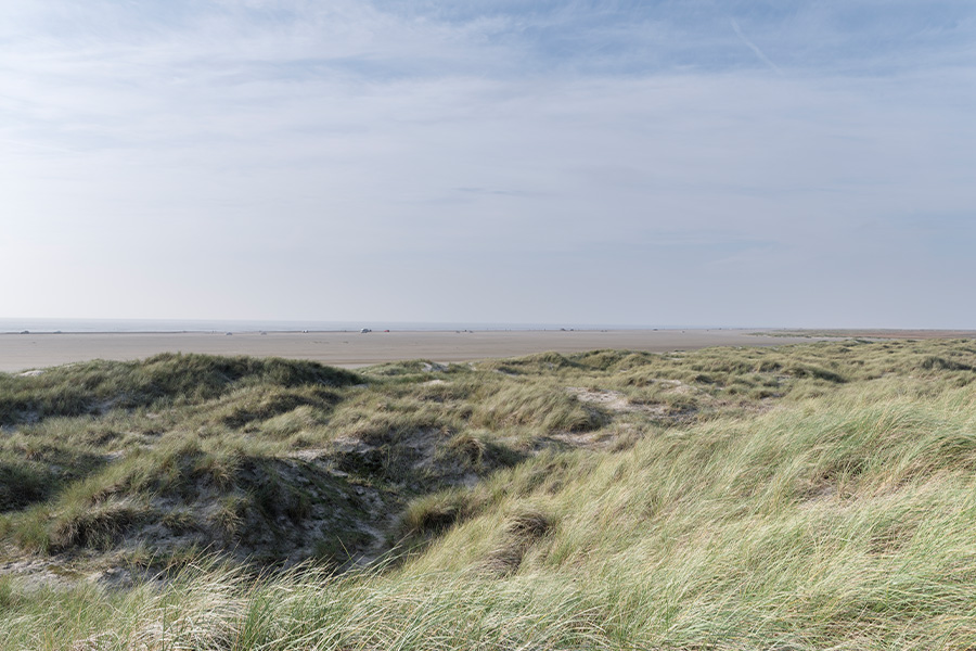 Beach and Dunes landscape